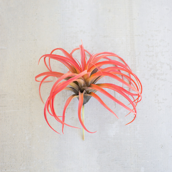 LARGE RED AIRPLANT