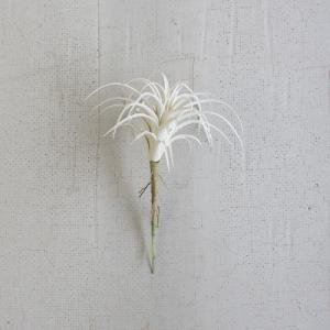 SMALL WHITE AIR PLANT
