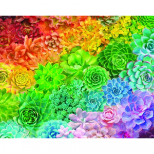 WHITE MOUNTAIN PUZZLES SUCCULENT RAINBOW 1000 PIECE